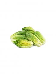 Bébi római saláta